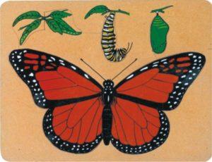 Monarch Life Cycle Puzzle (9pcs)-0