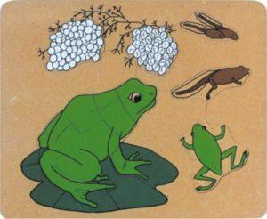 Frog Life Cycle Puzzle (15pcs)-0