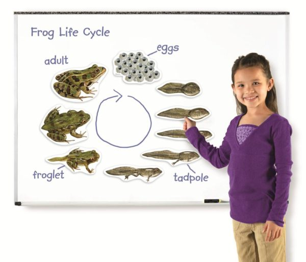 Giant Magnetic Frog Life Cycle (9pcs)-0