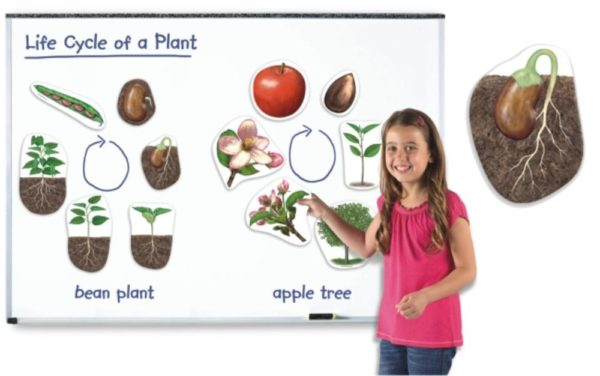 Giant Magnetic Plant Life Cycles (12pcs)-0