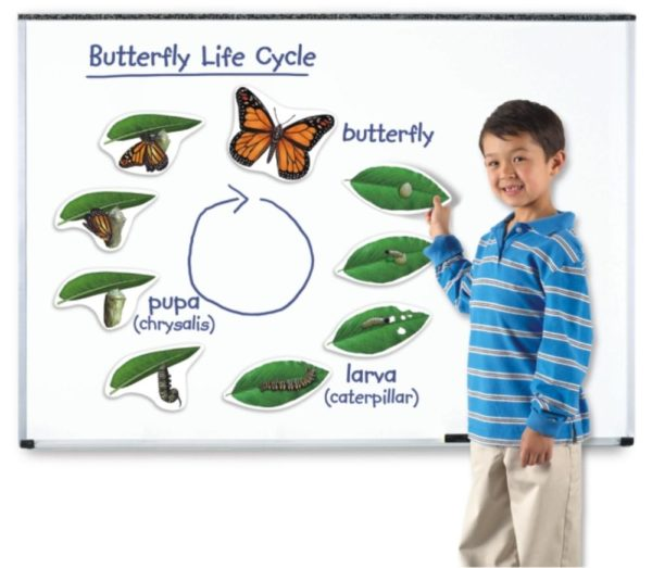 Giant Magnetic Butterfly Life Cycle (9pcs)-0