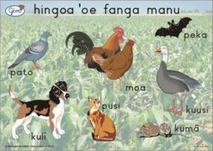 Backyard Animals Poster Tongan-0
