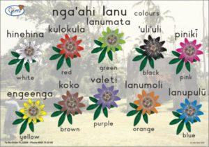 Colours Poster Tongan-0