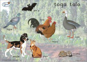 Taro Patch Poster Samoan-0
