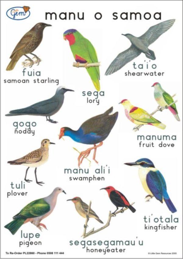 Birds of Samoa Poster-0
