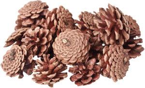 Pine Cones 200gsm-0