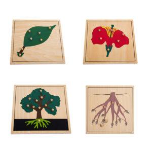 Botany Puzzle Set