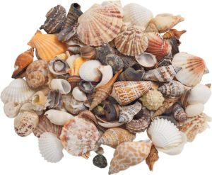 Sea Shells Assorted-0