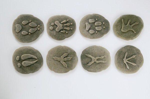 Let's Investigate - Woodland Footprint Stones (8pcs)-15904