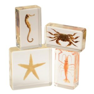 Encased Sea Life (4pcs)-0