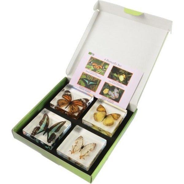 Encased Butterflies (4pcs)-0